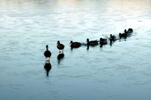 Leadership and getting your ducks in the row